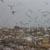 «Чистый город» потратит 19,3 млн рублей напроект реконструкции полигона ТБО
