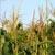 BASF сократит работу надбиотехнологиями