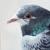 Голуби отправляют сообщения втвиттер озагрязнении воздуха Лондона