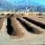 ВЛос-Анджелесе нагородской свалке построят электростанцию