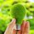 Среди самых экологичных офисов вРоссии увеличилось число отечественных компаний