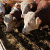 Ввологодских сельхозпредприятиях прошли испытания биопрепаратов