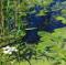 2февраля— Всемирный день водно-болотных угодий