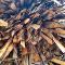 ВЛесосибирске будут перерабатывать отходы древесины