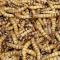 ВЯкутии разработали портативные станции споедающими пластик насекомыми